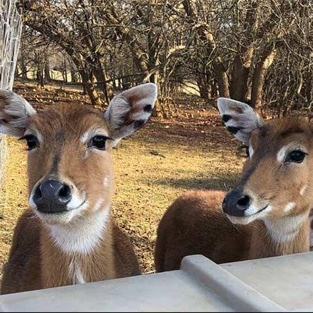 Bar C Ranch Petting Zoo(m) - Virtual Petting Zoo