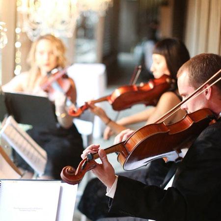 Organic String Quartet