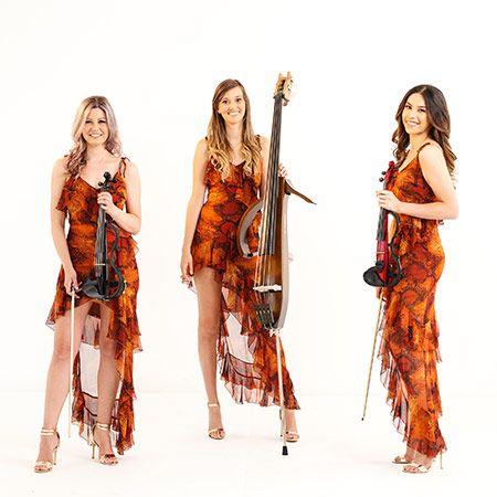 Vixen Strings - Electric & Acoustic Strings