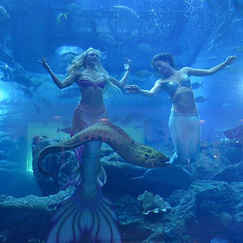 Mermaid of Arabia
