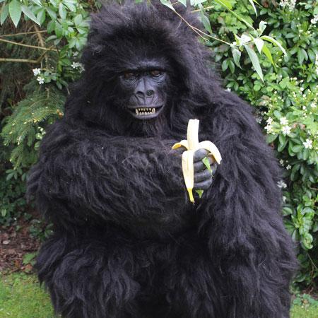 Candi Entertainment - Gorilla