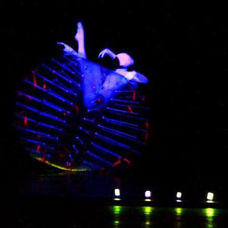 Evolution Dance Theatre - Anemone