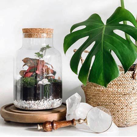 Jar and Fern - Terrarium Workshop