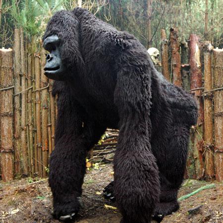 Area51 - King Kong